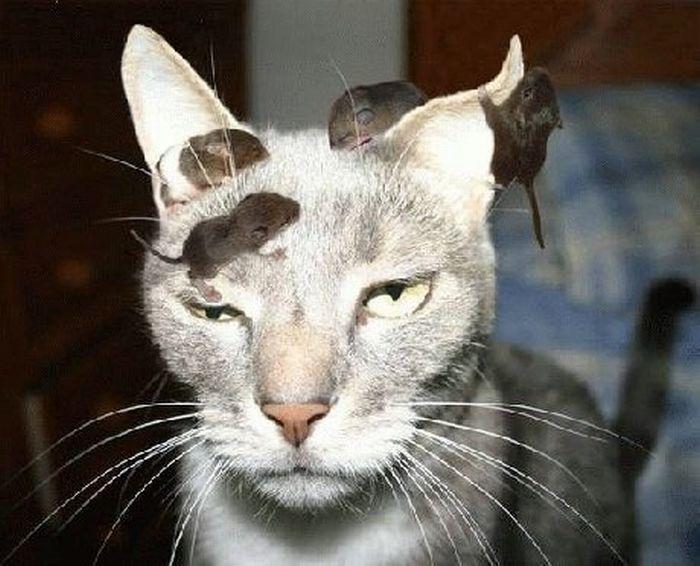 evil-cats01.jpg