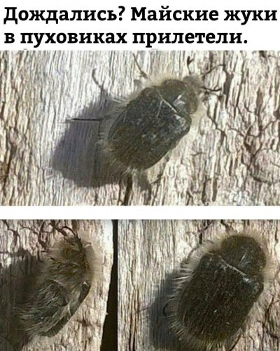 SDzhZjKObOU.jpg