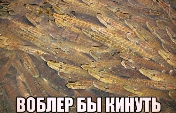 EMuNB8E9Ct4.jpg.52d8f9e55fc46d584f9d33480576419f.jpg