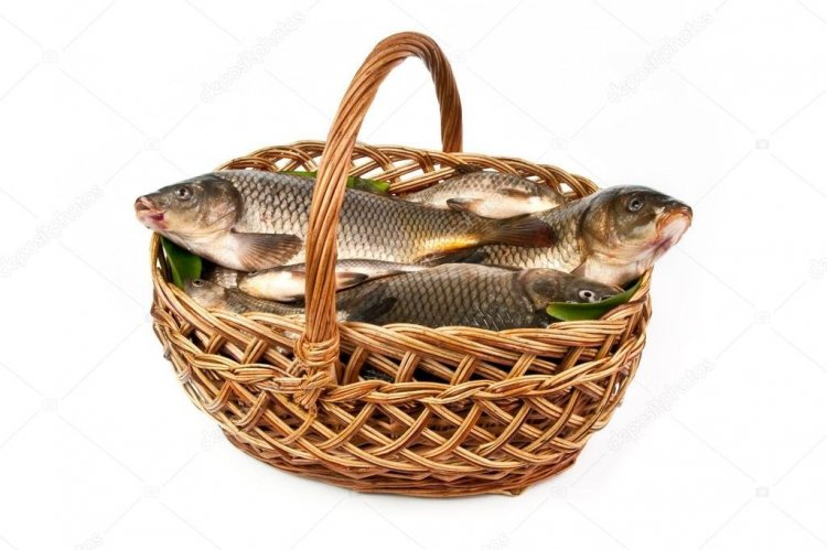 depositphotos_45556709-stock-photo-fresh-fish-in-a-basket.jpg